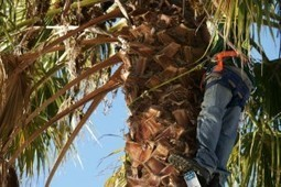 Roswell Tree Service, LLC is your local expert | Roswell Tree Service, LLC | Scoop.it