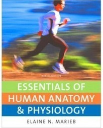 Test Bank For » Test Bank for Essentials of Human Anatomy & Physiology, 9th Edition: Elaine N. Marieb Download | Anatomy & Physiology Test Bank | Scoop.it