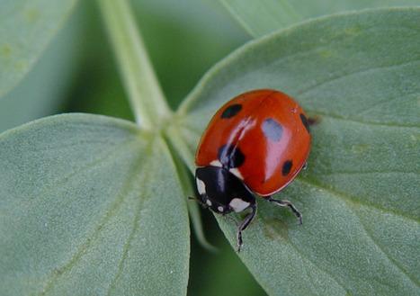 Meet the Beneficials: Natural Enemies of Garden Pests | School Gardening Resources | Scoop.it