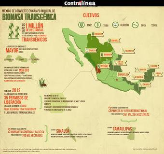 Agroecología: Mexico se convierte en campo mundial de biomasa transgénica | Biomasa y desarrollo económico | Scoop.it