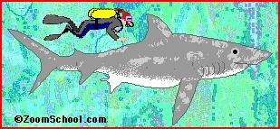 All About Sharks: Zoom Sharks - Enchanted Learning Software. | Sharks | Scoop.it