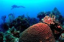 Damage to World's Oceans could Hit $2 Trillion a Year, Experts say | Ocean News | Scoop.it