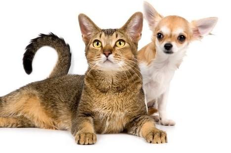 Assurance animaux: Assurance animaux - l'assurance pour animaux avec misterassur | Assurance chien animaux | Scoop.it