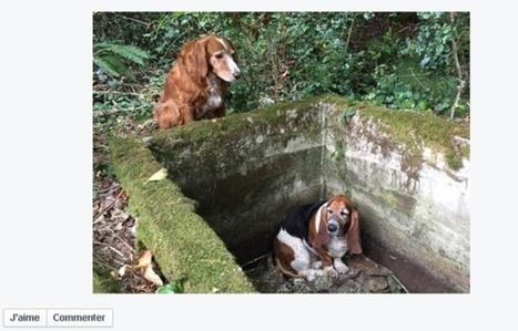 VIDEO. Etats-Unis: Un chien veille une semaine entière sur son compagnon piégé | CaniCatNews-actualité | Scoop.it