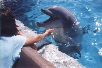 A Dolphin BitesBack | Animals in captivity - Zoo, circus, marine park, etc.. | Scoop.it