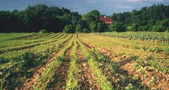 Summer Farmers' Market Directory | NOFA Vermont | Vermont | Scoop.it