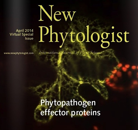 New Phytologist: Virtual Special Issue on phytopathogen effector proteins (2014) | Pathogenomics and Bioinformatics | Scoop.it