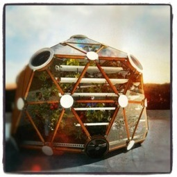Rooftop Fish: The Future of Urban Farming? | Urban Farming | Vertical Farm - Food Factory | Scoop.it