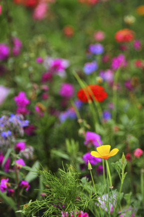 How to make your garden more eco-friendly this spring - Herts and Essex Observer   Help Save Our Beautiful Bees and Wildlife.Together we can make a difference.   Scoop.it