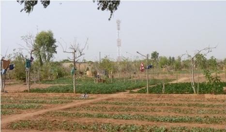 L'agriculture urbaine dans la ville africaine | ECONOMIES LOCALES VIVANTES | Scoop.it