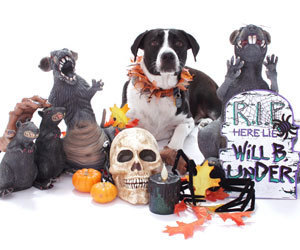 Dog Halloween Safety | Language - more than just words | Scoop.it