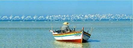 Reste Tunisien, nouvelle campagne patriotique sur Facebook | Patrimoine et Artisanat Tunisien | Scoop.it