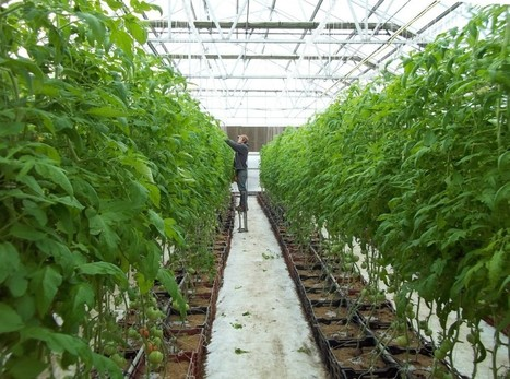 Fort Worth urban farming workshops set April 12 and April 24 | AgriLife Today | Vertical Farm - Food Factory | Scoop.it