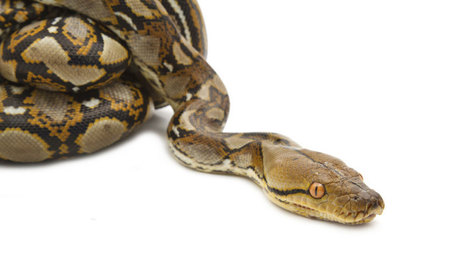 Reptile Group Sues US Government Over Snake Ban - Associations Now   REPTILICIOUS   Scoop.it