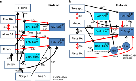 ISME J: Tree diversity and species identity effects on soil fungi, protists and animals are context dependent | Genomics and metagenomics of microbes | Scoop.it