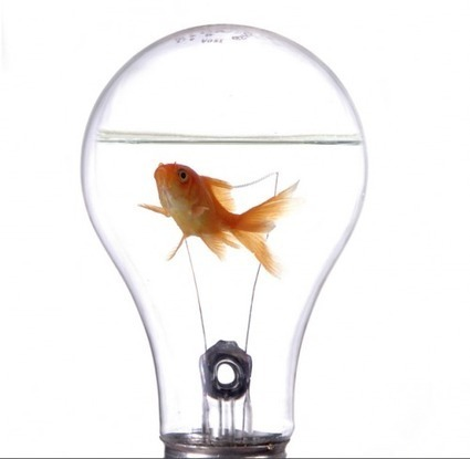 Innovation is a Decision | | The Attitude of HR | Scoop.it