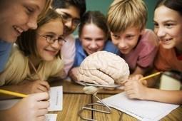 Plasticidade cerebral: um conceito que pais, alunos e professores deveriam conhecer | Inovação Educacional | Scoop.it