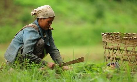 For Smallholder Farmers, Tenure Makes a Crucial Difference in Livelihoods   sustainability and resilience   Scoop.it
