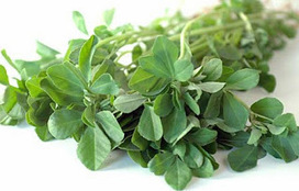 Health benefits of fenugreek ~ Herbs Advisor - Herbal and Natural Remedies | natural health & herbal remedies | Scoop.it