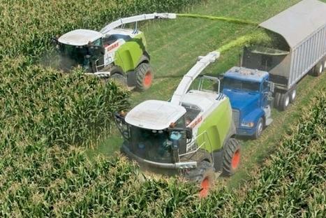 Argentina: El rinde del maiz sigue en los 76 qq/ha | Maíz | Scoop.it