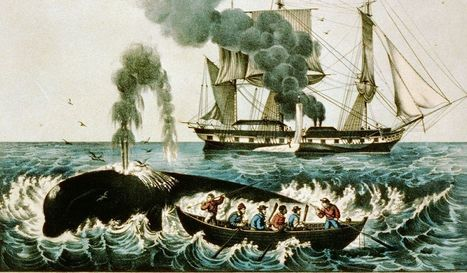 Why Harvard Business School teaches students about whaling | The Innovation Economy | Scoop.it