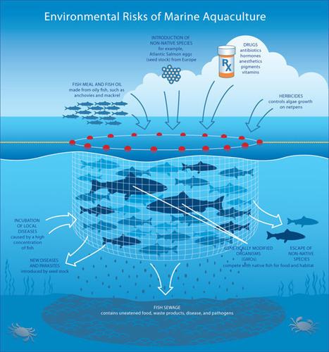 Making Fish Farming More Sustainable | Aquaculture | Scoop.it