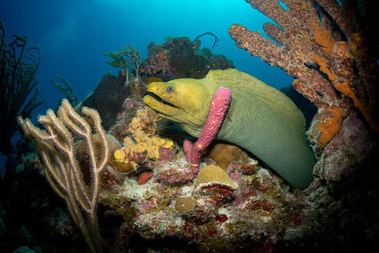 Coral mappers reach Caribbean waters - environment - 01 August 2013 - New Scientist | Sustainable Futures | Scoop.it