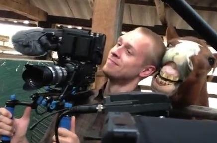 Un cheval embête un caméraman | Divertissonsnous.com | Cheval | Scoop.it