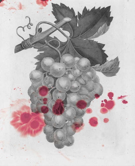 The Man Who Plotted To Poison The World's Greatest Wine | Wine General | Scoop.it