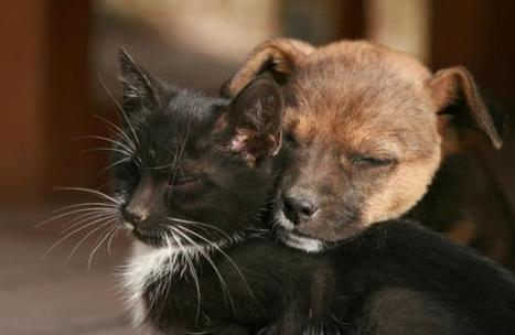 Can Dogs and Cats Live Together?  - Pet360 Pet Parenting Simplified | cats & dogs! | Scoop.it