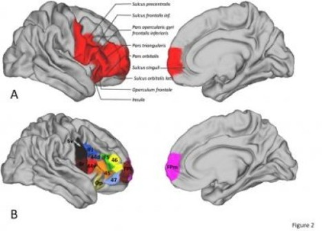 Brain regions thought to be uniquely human share many similarities with monkeys | Amazing Science | Scoop.it