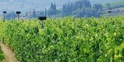 Des vignes bercées par de la musique classique ... | Christophe Durand Conseils | Scoop.it