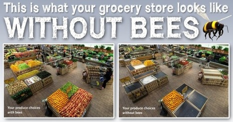This is what your grocery store looks like without bees | Positive Lifestyle | Scoop.it