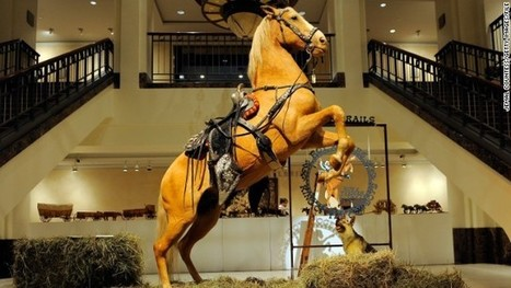 The art of living forever: Equine taxidermy | The One | Scoop.it