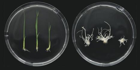 Science: The CRISPR Craze (2013)   Plant Biology Teaching Resources (Higher Education)   Scoop.it