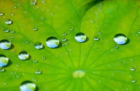 'Nature = Futur!' 30 films courts sur le biomimétisme - Biomimicry ... | Biomimétisme & Biomimicry | Scoop.it