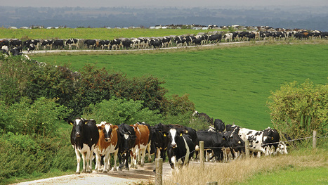 British firms top farm animal welfare approach table - Farmers Weekly   Animals R Us   Scoop.it