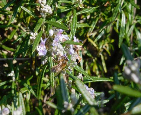 TROMBINOSCOPE - Mais qui sont les #sénaTUEURS d'abeilles ? | Chronique d'un pays où il ne se passe rien... ou presque ! | Scoop.it