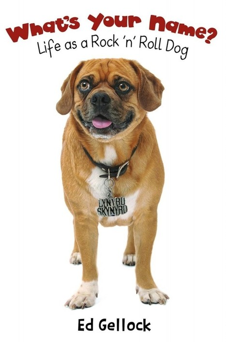 PUGGLE LYNYRD SKYNYRD - A DOG WITH A CAUSE | My Frynds Scoops | Scoop.it
