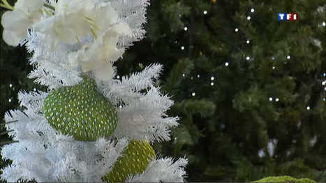 Des milliers d'insectes dans votre sapin de Noël - Insolite - MYTF1News   Inter Nettoyage Service Bretagne   Scoop.it