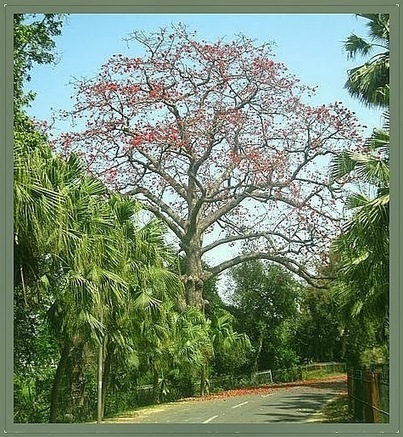 Life and Spirituality: The Palash Tree - Magic of Medicinal Herbs ... | Limitless learning Universe | Scoop.it