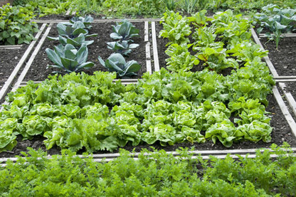 Potager Gardening — Everyone should do this!   Green Phoenix ...   Vertical Farm - Food Factory   Scoop.it
