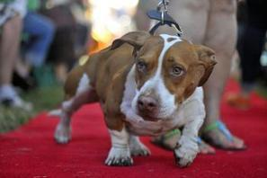 Et le chien le plus moche du monde est…   Mais n'importe quoi !   Scoop.it