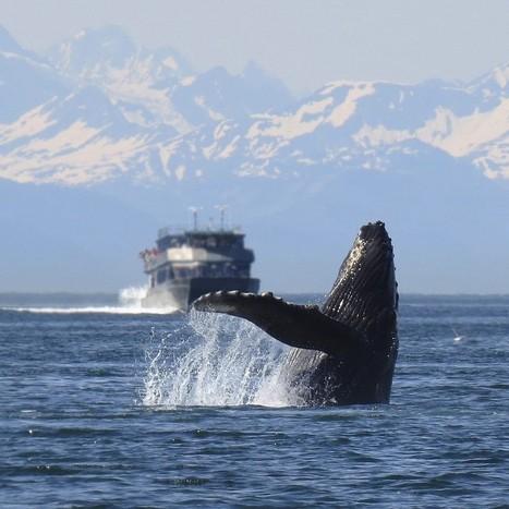 Delfines y ballenas de nuevo en peligro, wifi bajo el agua | Biblioteca CCBA | Scoop.it