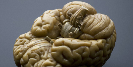 Here's Why You Should Donate Your Brain to Science | Science | WIRED | leapmind | Scoop.it