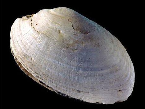 World's Oldest Art Identified in Half-Million-Year-Old Zigzag | Archivance - Miscellanées | Scoop.it