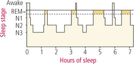 How Much Sleep Do You Need? Sleep Cycles & Stages, Lack of Sleep, and How to Get the Hours You Need | Road to no Stress | Scoop.it