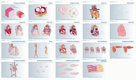 3000 images du domaine médical et sciences associées proposées par Servier sous licence de type CC-by | Recursos diseño gráfico | Scoop.it