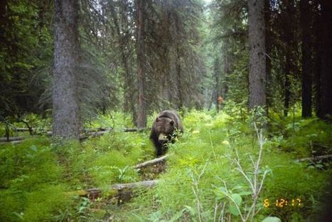 Hunting for Trophies - European Wilderness Society | Confidences Canopéennes | Scoop.it
