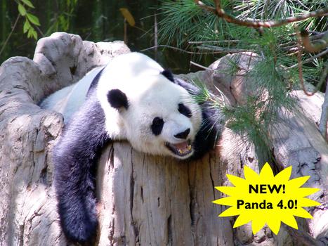 Google Releases Gentler Panda 4.0 Update - We Do Web Content | Web Content Tips from a Web Content Provider | Scoop.it